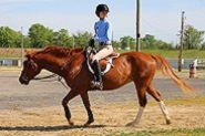 Life Learning on a horse farm
